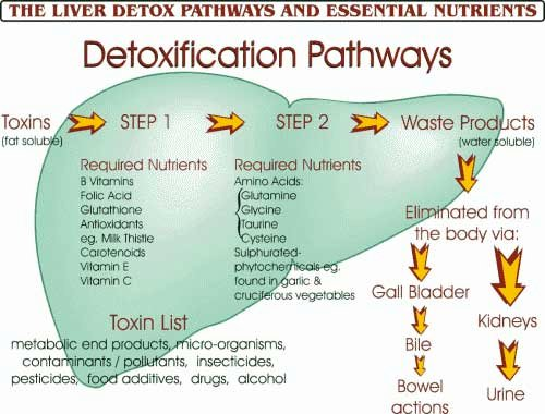 Body Detox The Most Effective Methods